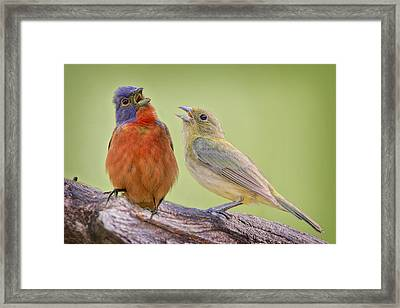 Singing Buntings Framed Print by Bonnie Barry