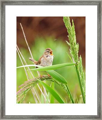 Singing For A Companion Framed Print