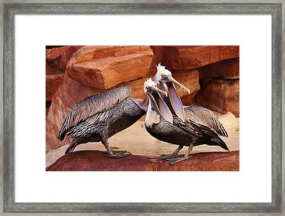 Singing In Perfect Harmony Framed Print by Paulette Thomas