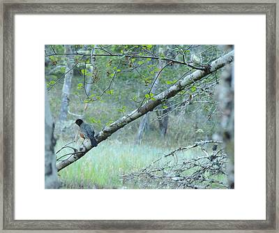 Singing In The Trees Framed Print by Karen Horn