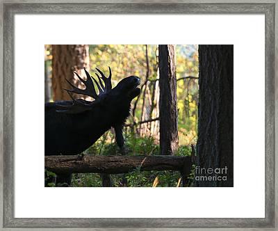 Singing Moose Framed Print by Mike Dawson