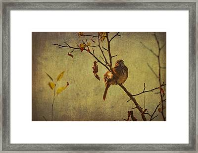 Framed Print featuring the photograph Singing Sparrow by Peggy Collins