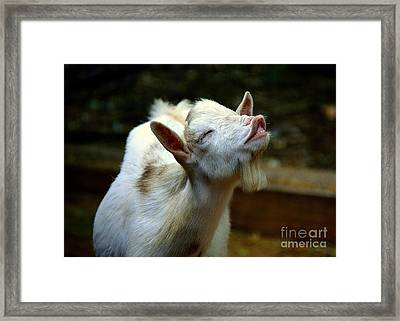 Singing The Blues Framed Print by Lisa L Silva
