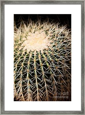 Single Cactus Ball Framed Print