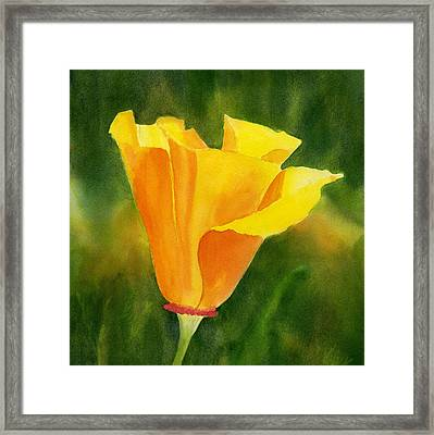 Single California Poppy Framed Print by Sharon Freeman