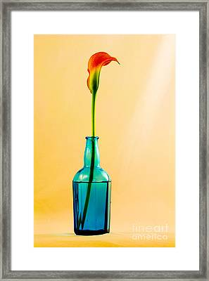 Single Calla In Blue Bottle Framed Print