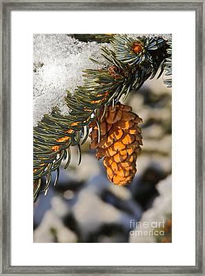 Single Cone Framed Print by Rick  Monyahan