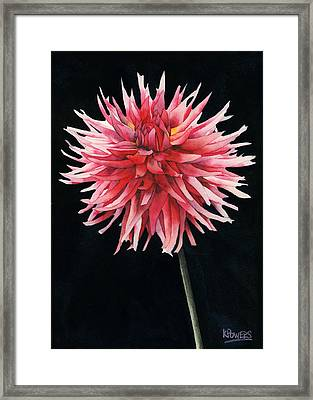 Single Dahlia Framed Print