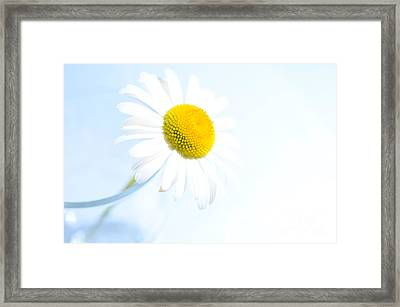 Single Daisy Flower In Vase Framed Print by Sabine Jacobs