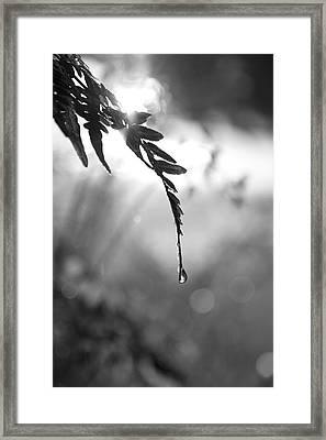 single drop BW Framed Print