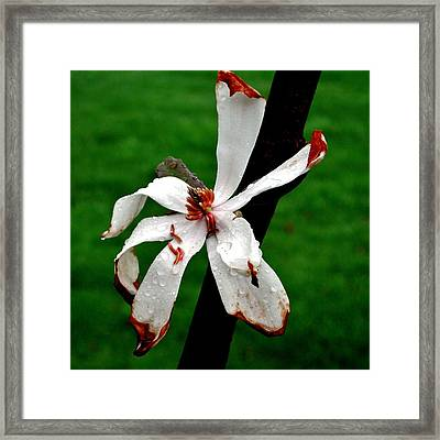 Single Flower Framed Print