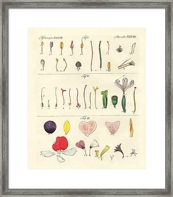 Single Flower Parts Framed Print