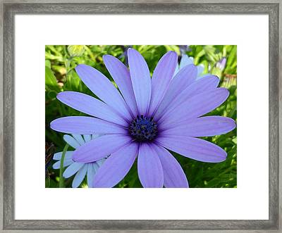 Single Framed Print by Gandz Photography