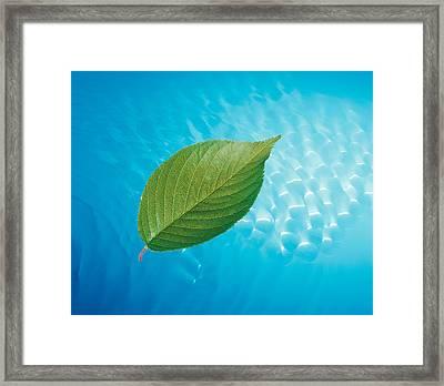 Single Green Leaf Above Blue Water Framed Print