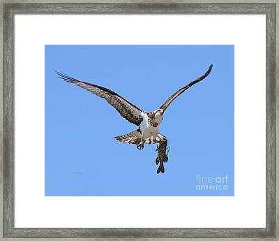 Framed Print featuring the photograph Single Handed by Heather King