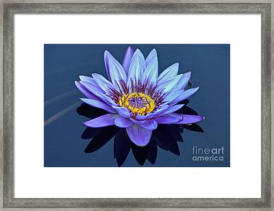 Single Lavender Water Lily Framed Print