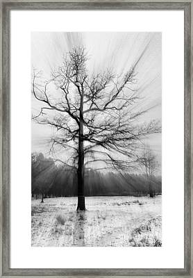 Single Leafless Tree In Winter Forest Framed Print