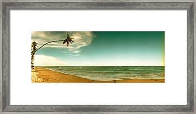 Single Leaning Palm Tree On The Beach Framed Print by Panoramic Images
