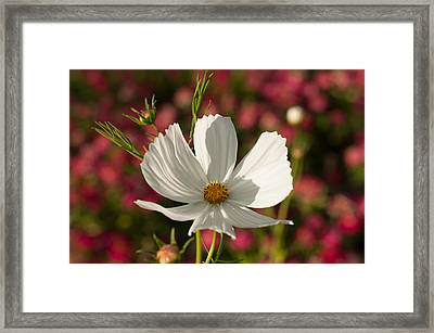 Single Framed Print by Miguel Winterpacht