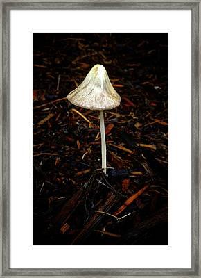 Single Mushroom Framed Print