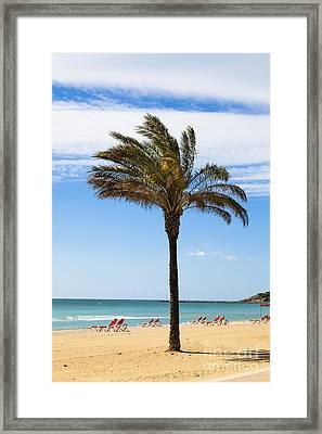 Single Palm Tree On Beach With Unoccupied Sun Loungers Framed Print