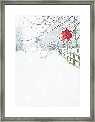 Single Red Leaf Framed Print by Amanda Elwell