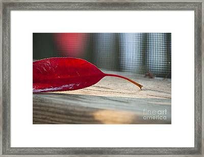 Single Red Leaf Framed Print by Terry Rowe
