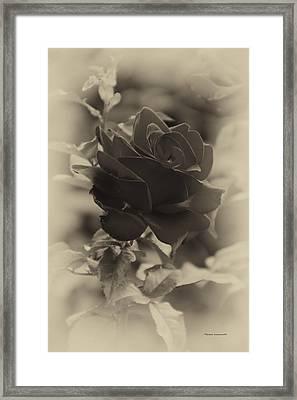 Single Red Rose Heirloom Framed Print