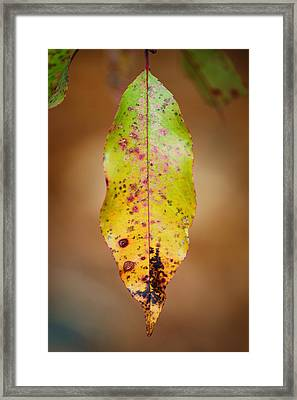 Single Framed Print by Sarah Coppola