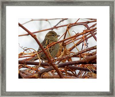 Single Sparrow Standing Framed Print