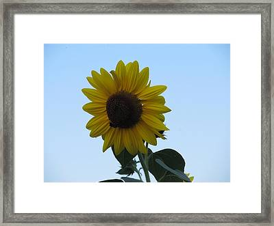 Framed Print featuring the photograph Single Sunflower And The Bees by Tina M Wenger