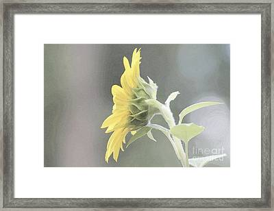 Single Sunflower Framed Print