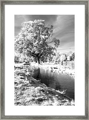 Single Tree Aginst The Sun Framed Print by Maj Seda