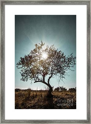 Single Tree Framed Print by Carlos Caetano