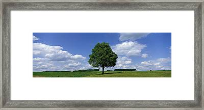 Single Tree, Germany Framed Print