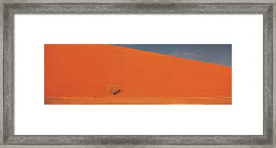 Single Tree In Desert Namibia Framed Print by Panoramic Images