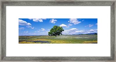 Single Tree In Field Of Wildflowers Framed Print