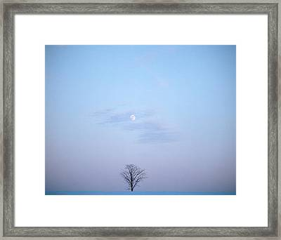 Single Tree In Winter Landscape Evening Framed Print