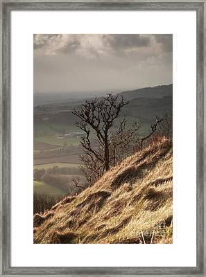 Single Tree Sutton Bank Framed Print by Deborah Benbrook