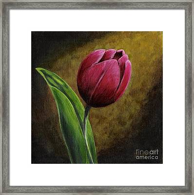 Single Tulip Framed Print