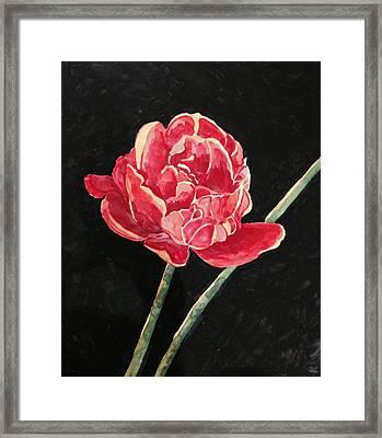 Single Tulip On Black Background Framed Print