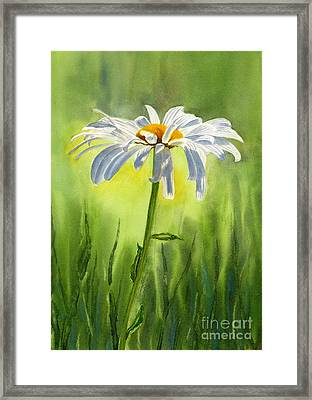 Single White Daisy  Framed Print by Sharon Freeman