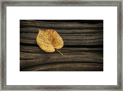 Single Yellow Birch Leaf Framed Print