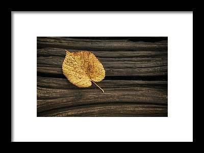 Wood Grain Framed Prints