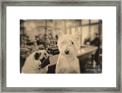 Singles Night Framed Print by Edward Fielding