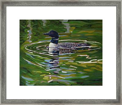Singleton Loon Framed Print by Phil Chadwick