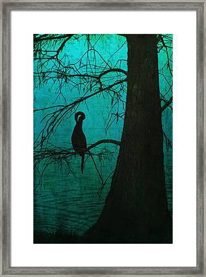 Singular Anhinga  Framed Print