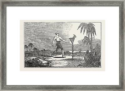 Singular Dexterity Of A Goat Framed Print by English School