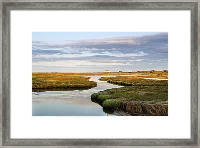 Sippewissett Marsh Framed Print