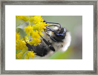 Sipping Bee Framed Print